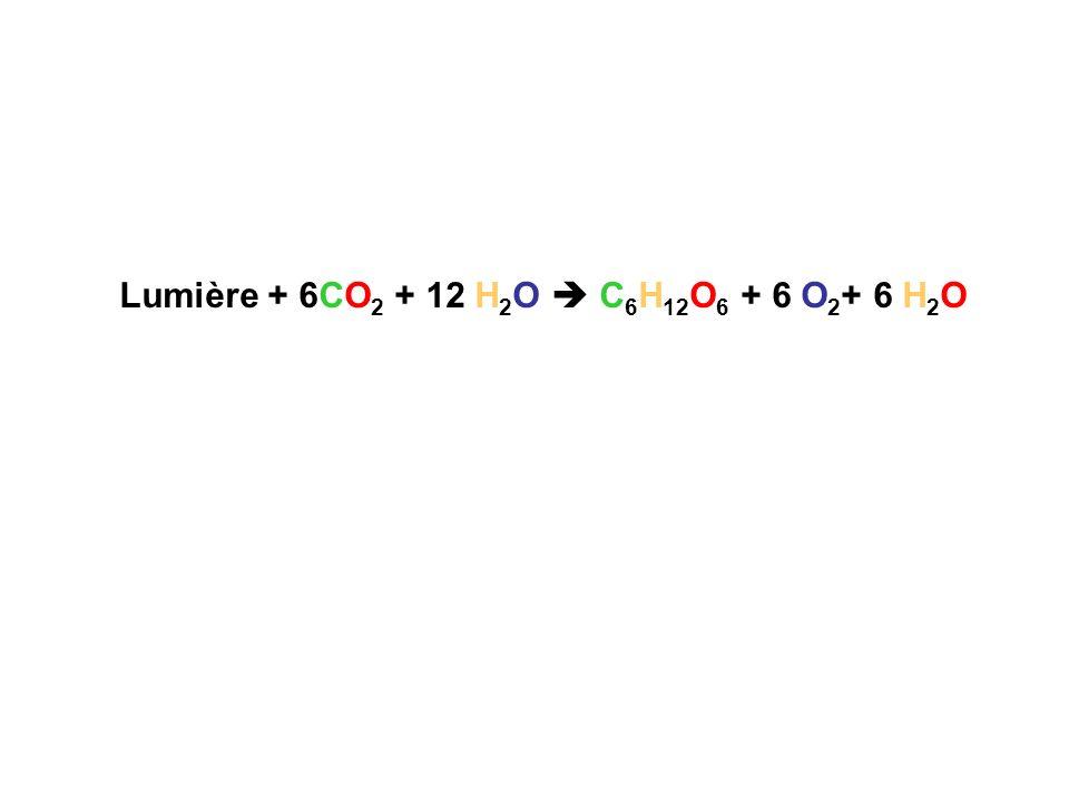Lumière + 6CO2 + 12 H2O  C6H12O6 + 6 O2+ 6 H2O
