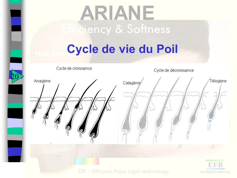 Cycle de vie du Poil 20 Anagène Cycle de croissance