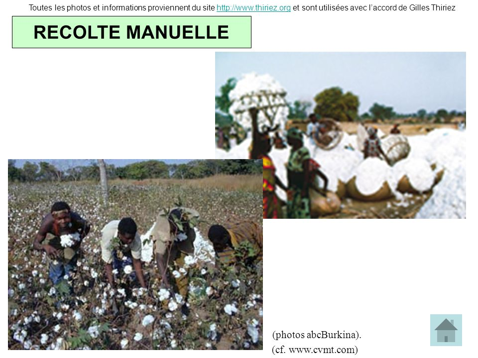 RECOLTE MANUELLE (photos abcBurkina). (cf. www.cvmt.com)