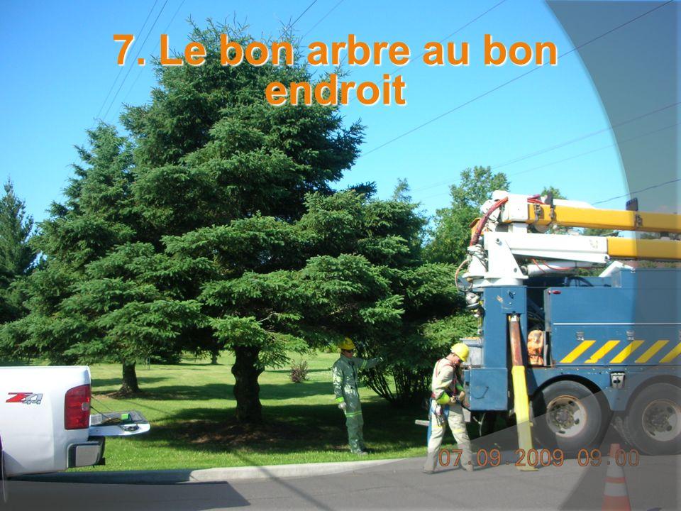 7. Le bon arbre au bon endroit