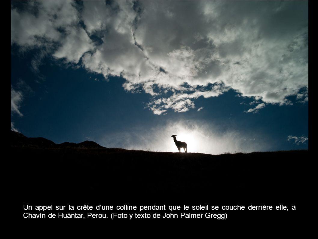 Un appel sur la crête d'une colline pendant que le soleil se couche derrière elle, à Chavín de Huántar, Perou.