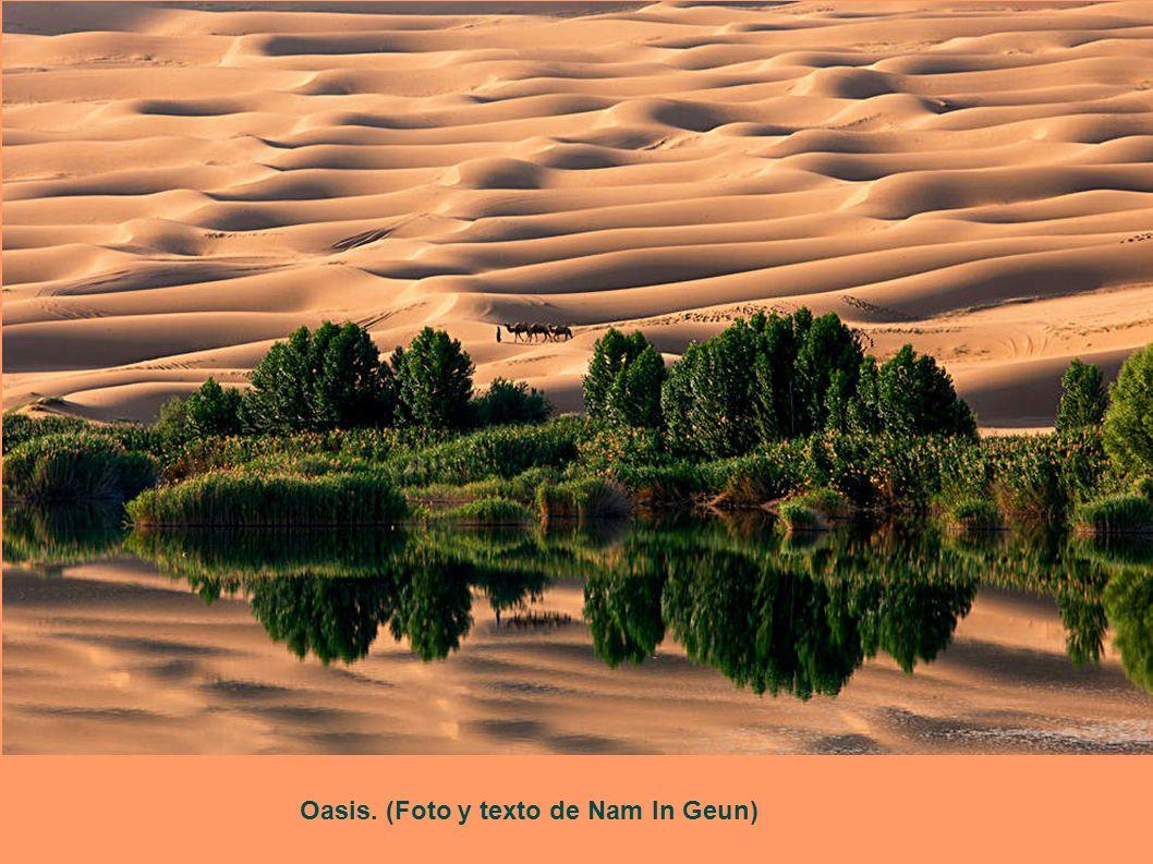 Oasis. (Foto y texto de Nam In Geun)