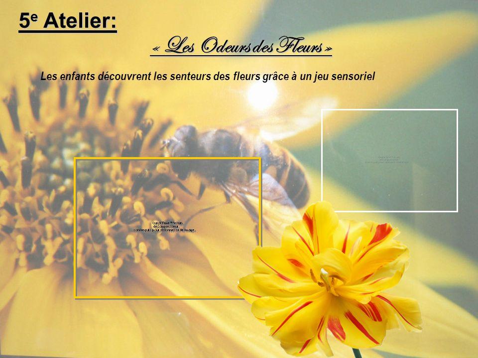 « Les Odeurs des Fleurs »