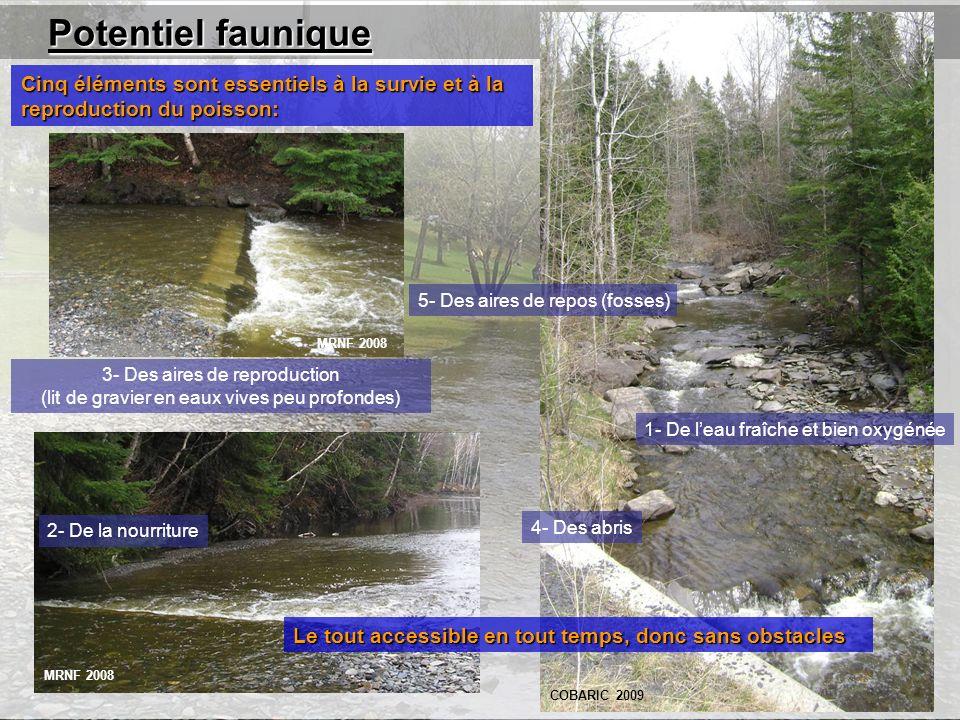 Potentiel faunique Cinq éléments sont essentiels à la survie et à la reproduction du poisson: 5- Des aires de repos (fosses)