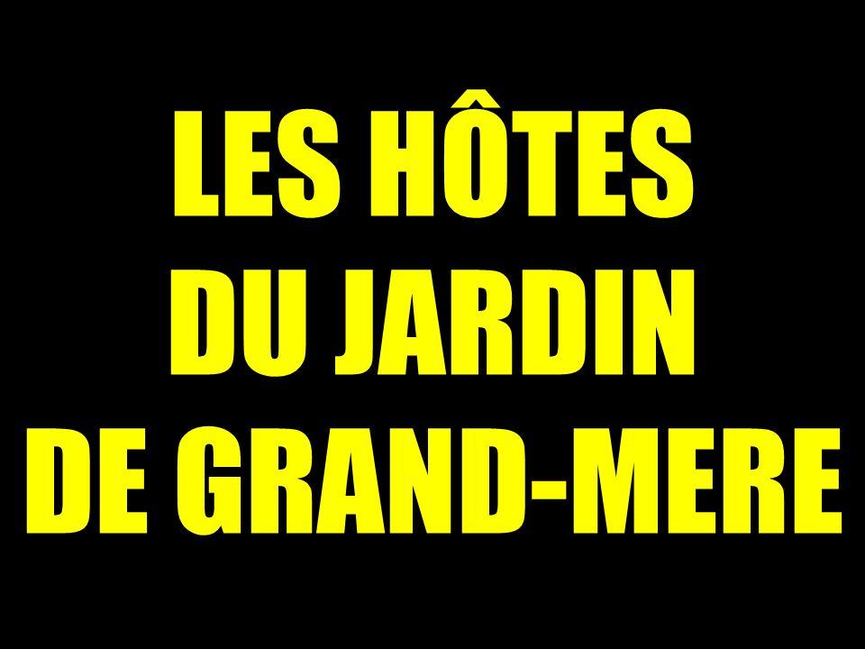 Les h tes du jardin de grand mere ppt video online for Au jardin de ma grand mere
