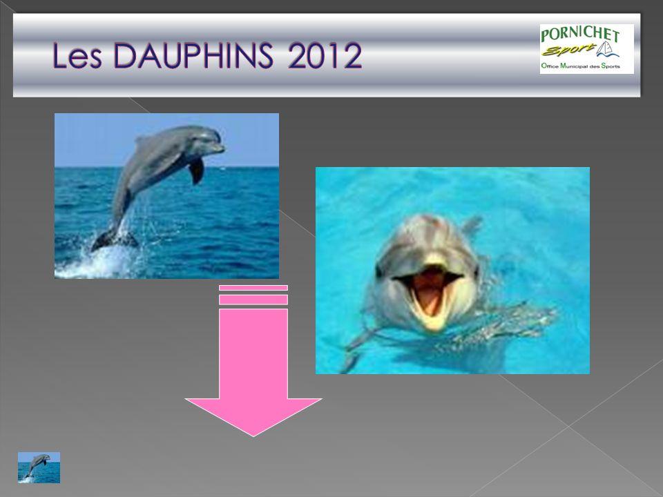Les DAUPHINS 2012
