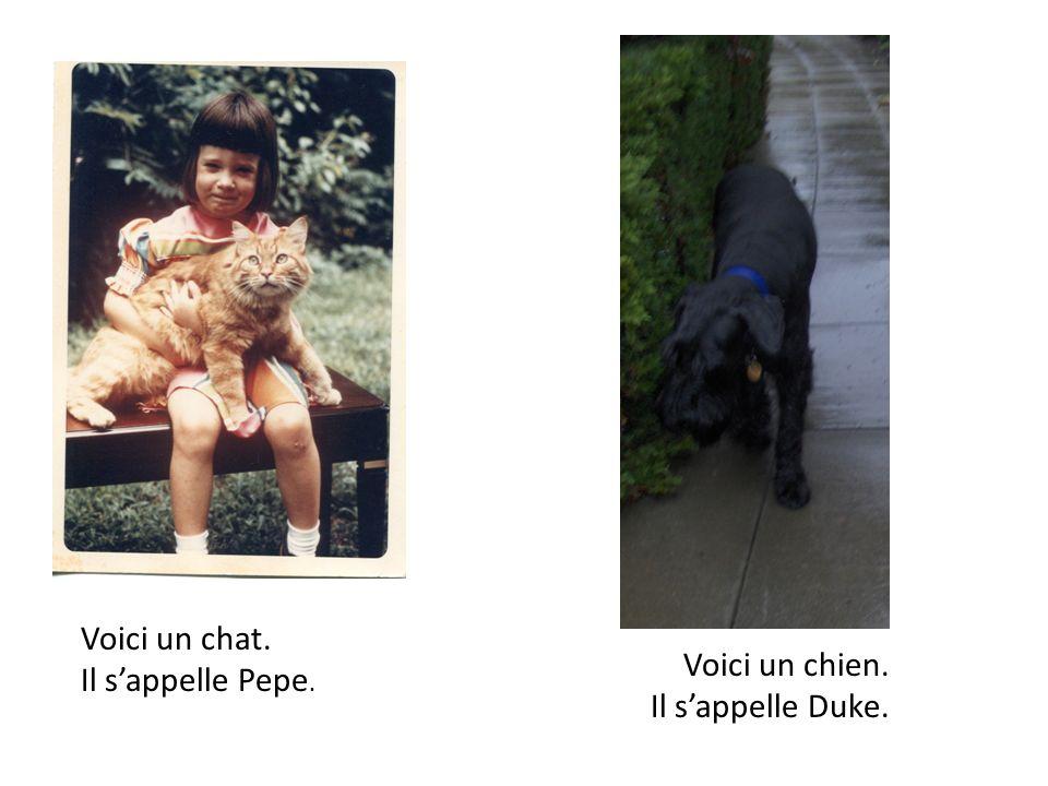 Voici un chat. Il s'appelle Pepe. Voici un chien. Il s'appelle Duke.