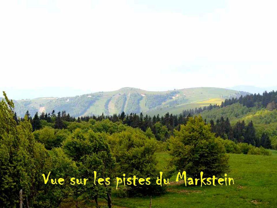 Départ de la marche de 12 km Vue sur les pistes du Markstein