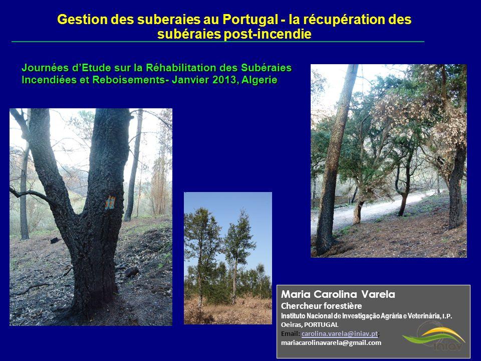 Gestion des suberaies au Portugal - la récupération des subéraies post-incendie