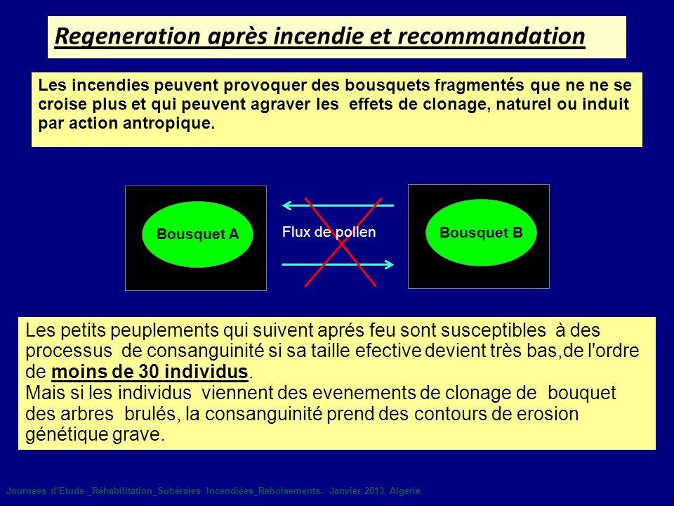 Regeneration après incendie et recommandation