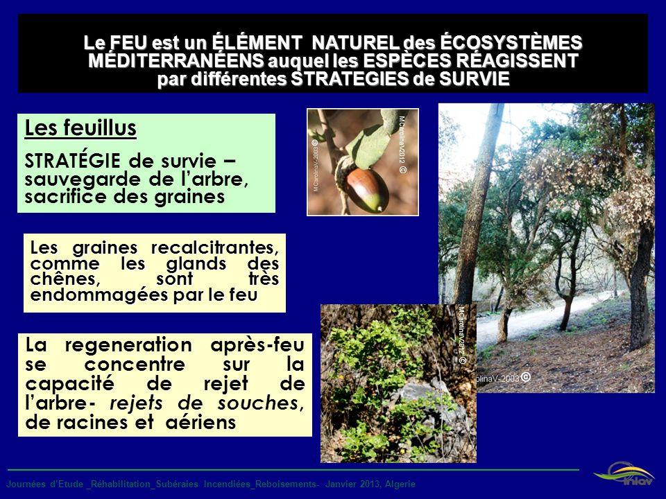 Le FEU est un ÉLÉMENT NATUREL des ÉCOSYSTÈMES MÉDITERRANÉENS auquel les ESPÈCES RÉAGISSENT par différentes STRATEGIES de SURVIE