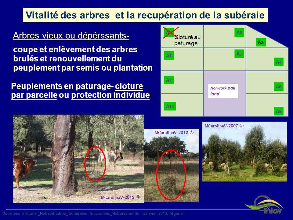 Vitalité des arbres et la recupération de la subéraie