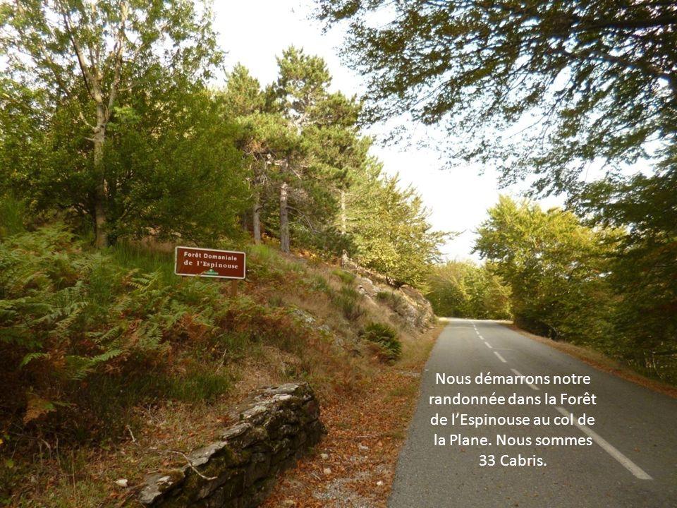 Nous démarrons notre randonnée dans la Forêt de l'Espinouse au col de la Plane.