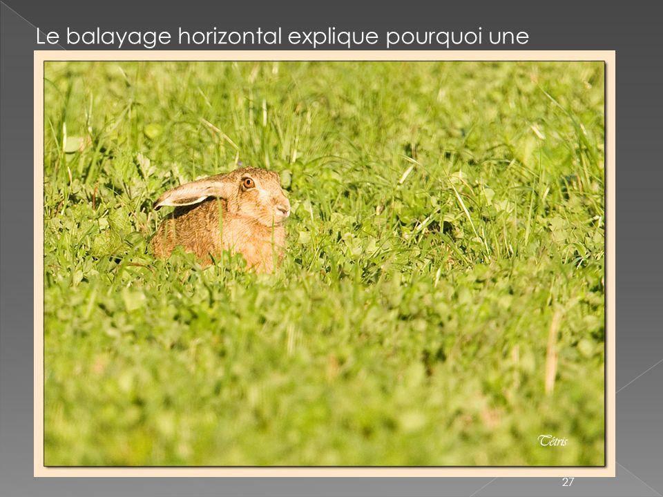 Le balayage horizontal explique pourquoi une photographie avec des dominantes horizontales sera reposante pour l'œil (évoque le calme, la profondeur et permet d élargir l image)