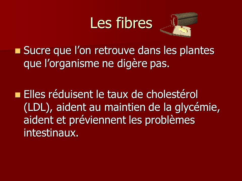Les fibres Sucre que l'on retrouve dans les plantes que l'organisme ne digère pas.
