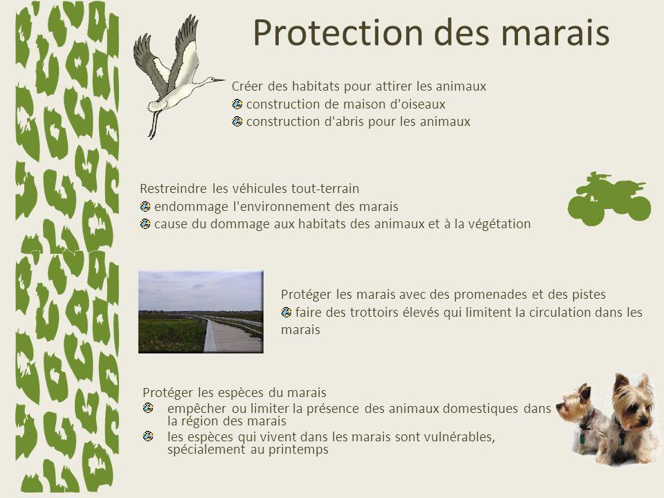 Protection des marais Créer des habitats pour attirer les animaux