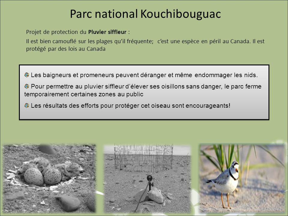 Parc national Kouchibouguac