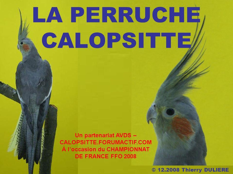 LA PERRUCHE CALOPSITTE