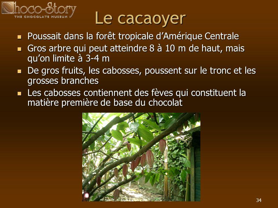 Le cacaoyer Poussait dans la forêt tropicale d'Amérique Centrale