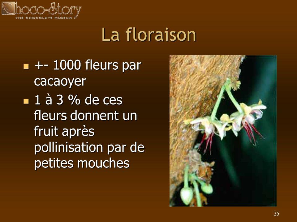 La floraison +- 1000 fleurs par cacaoyer