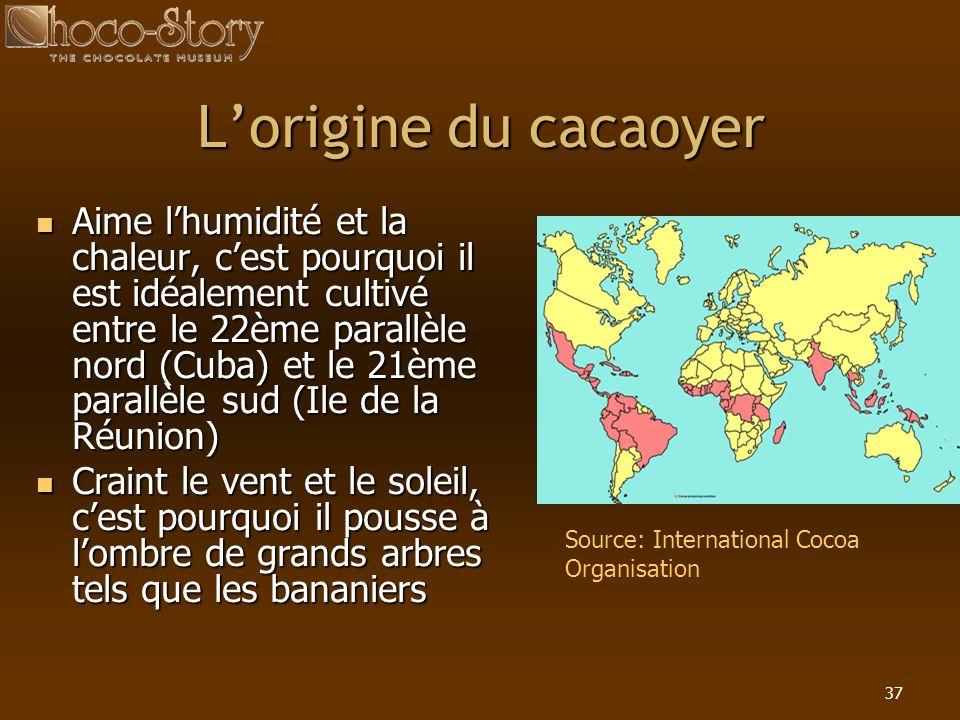 L'origine du cacaoyer