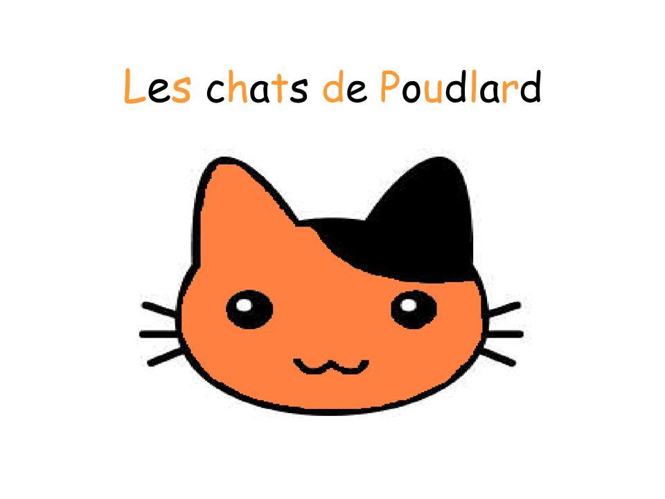 Les chats de Poudlard