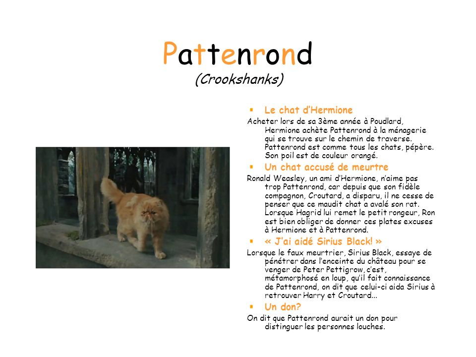 Pattenrond (Crookshanks)