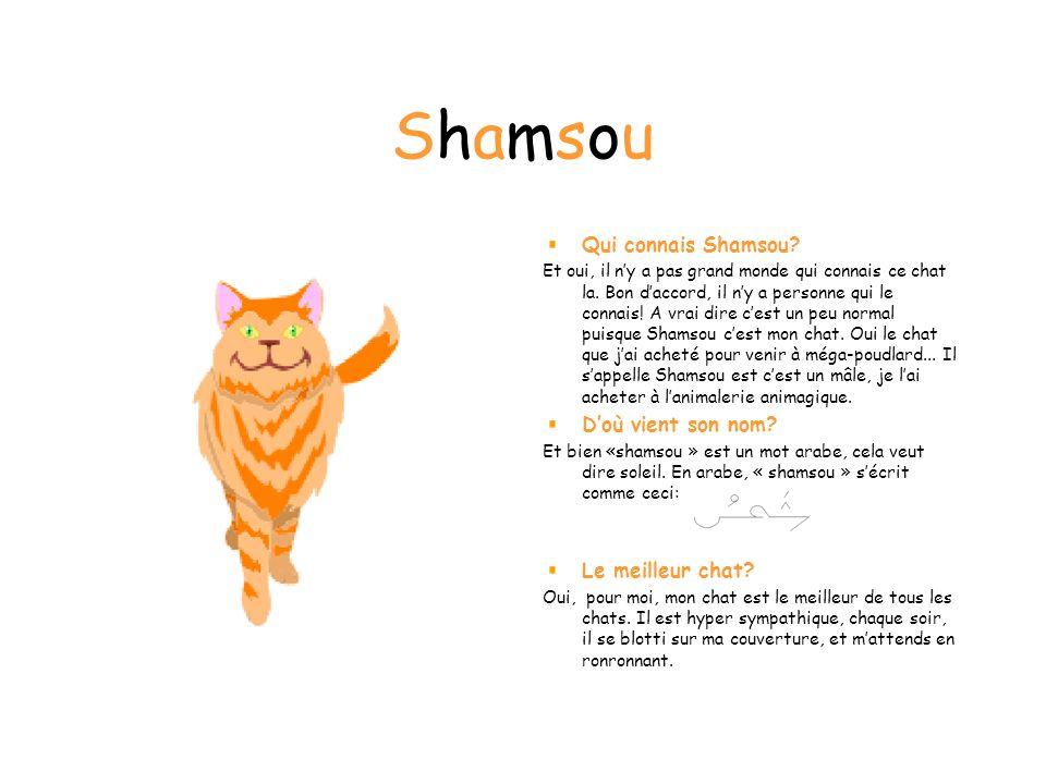 Shamsou Qui connais Shamsou D'où vient son nom Le meilleur chat