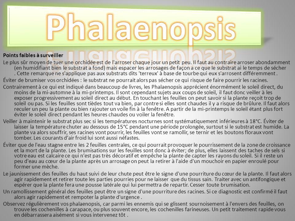 Phalaenopsis Points faibles à surveiller
