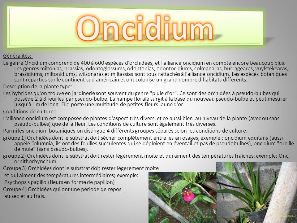 Oncidium Généralités:
