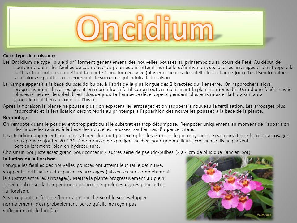 Oncidium Cycle type de croissance