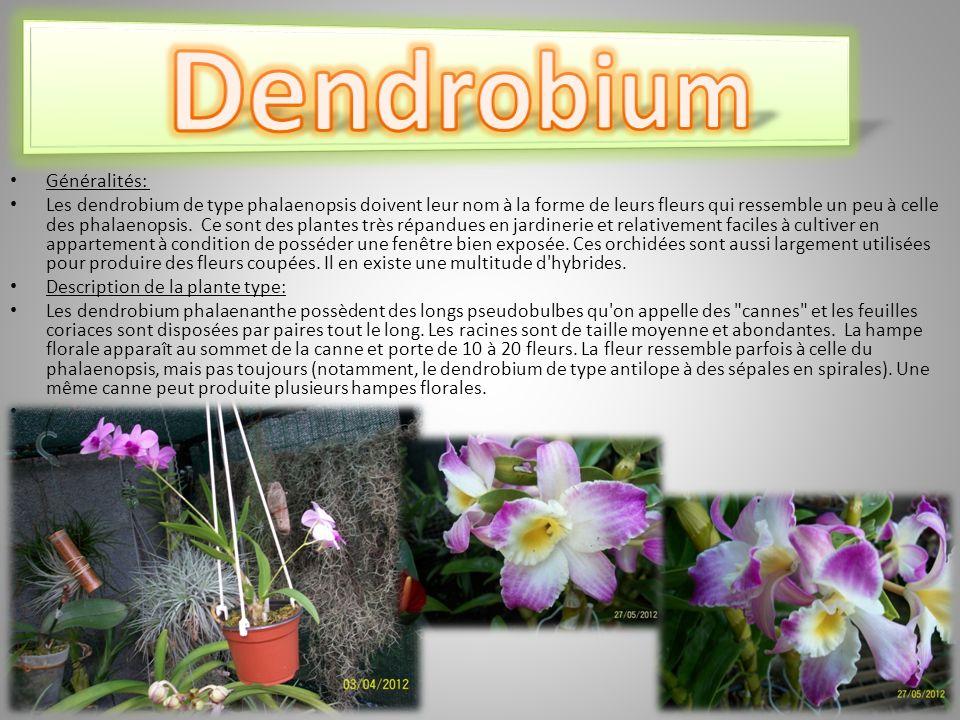 Dendrobium Généralités: