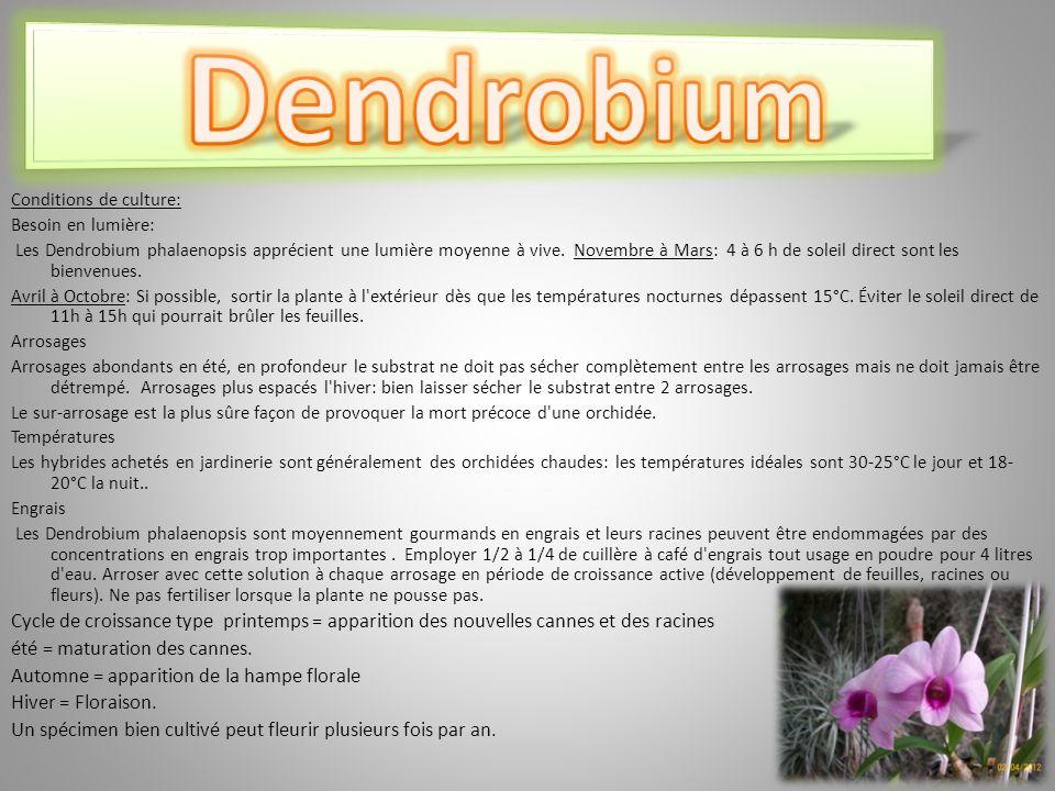 Dendrobium Conditions de culture: Besoin en lumière: