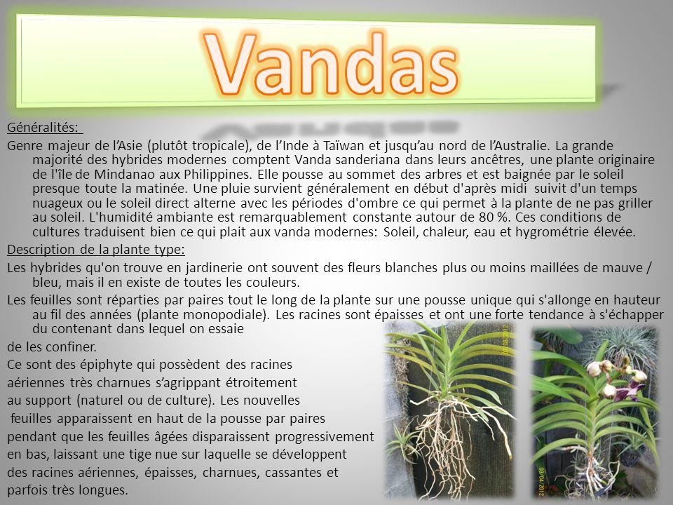Vandas Généralités: