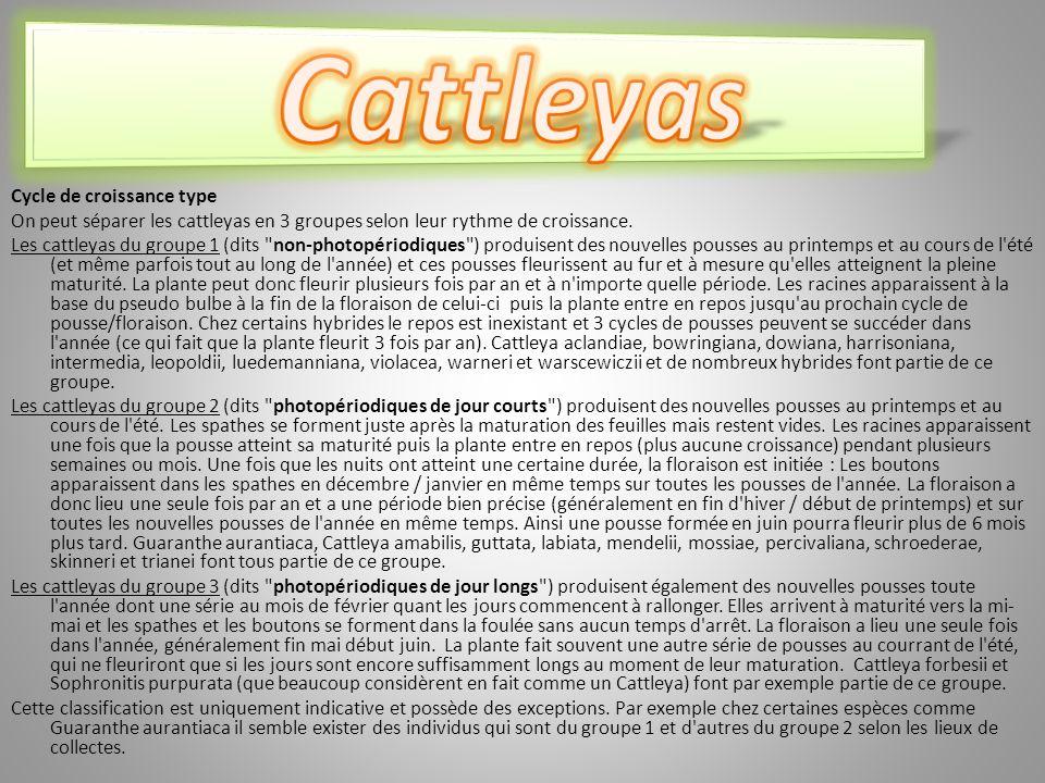 Cattleyas Cycle de croissance type