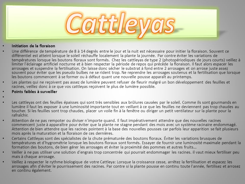 Cattleyas Initiation de la floraison
