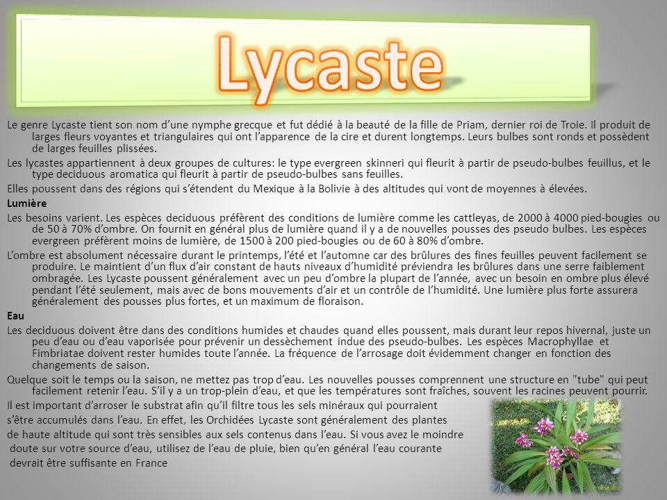 Lycaste