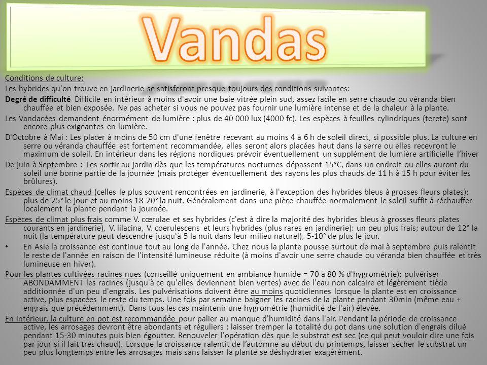 Vandas Conditions de culture: