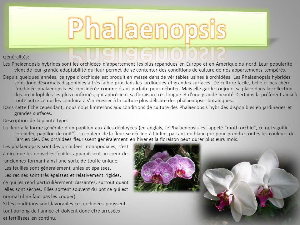 Phalaenopsis Généralités:
