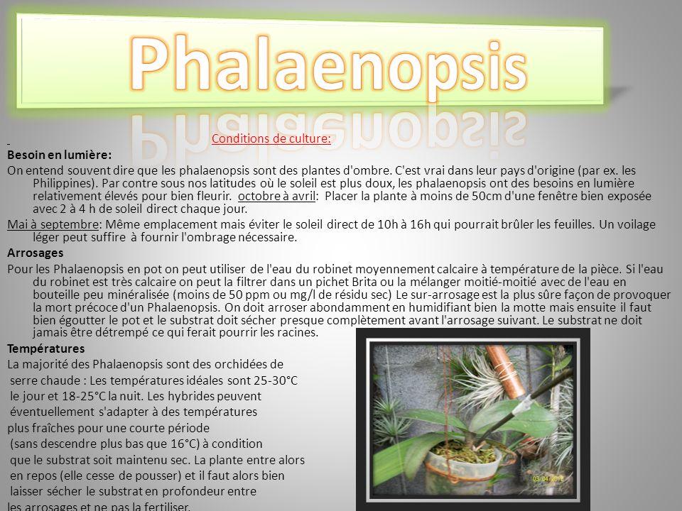Phalaenopsis Conditions de culture: Besoin en lumière: