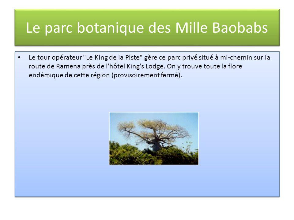Le parc botanique des Mille Baobabs