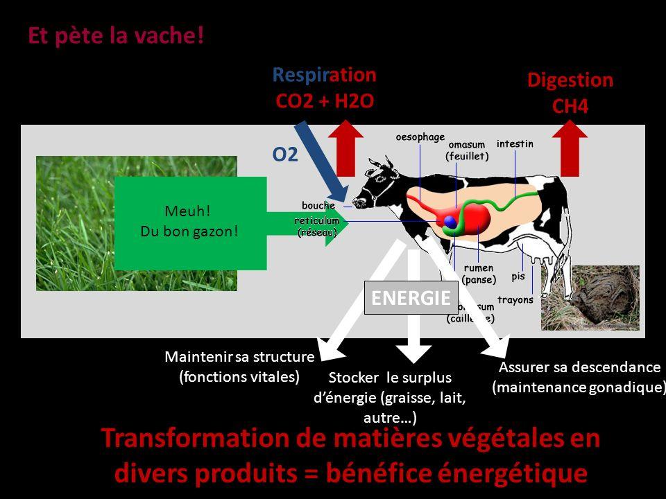 Et pète la vache! Respiration. CO2 + H2O. O2. Digestion. CH4. Meuh! Du bon gazon! Maintenir sa structure (fonctions vitales)