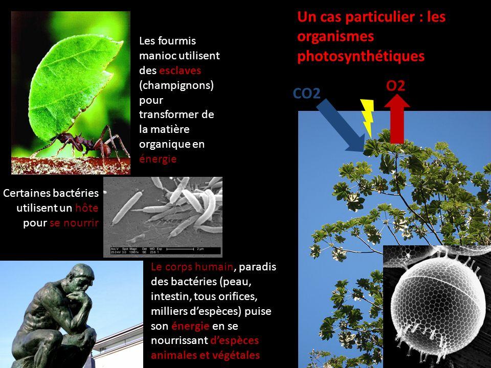 Un cas particulier : les organismes photosynthétiques