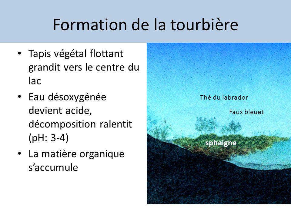 Formation de la tourbière