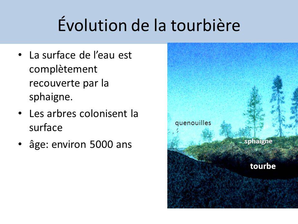 Évolution de la tourbière