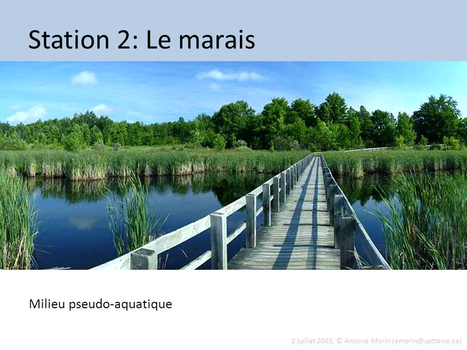 Station 2: Le marais Milieu pseudo-aquatique Tue 13 Aug 2013