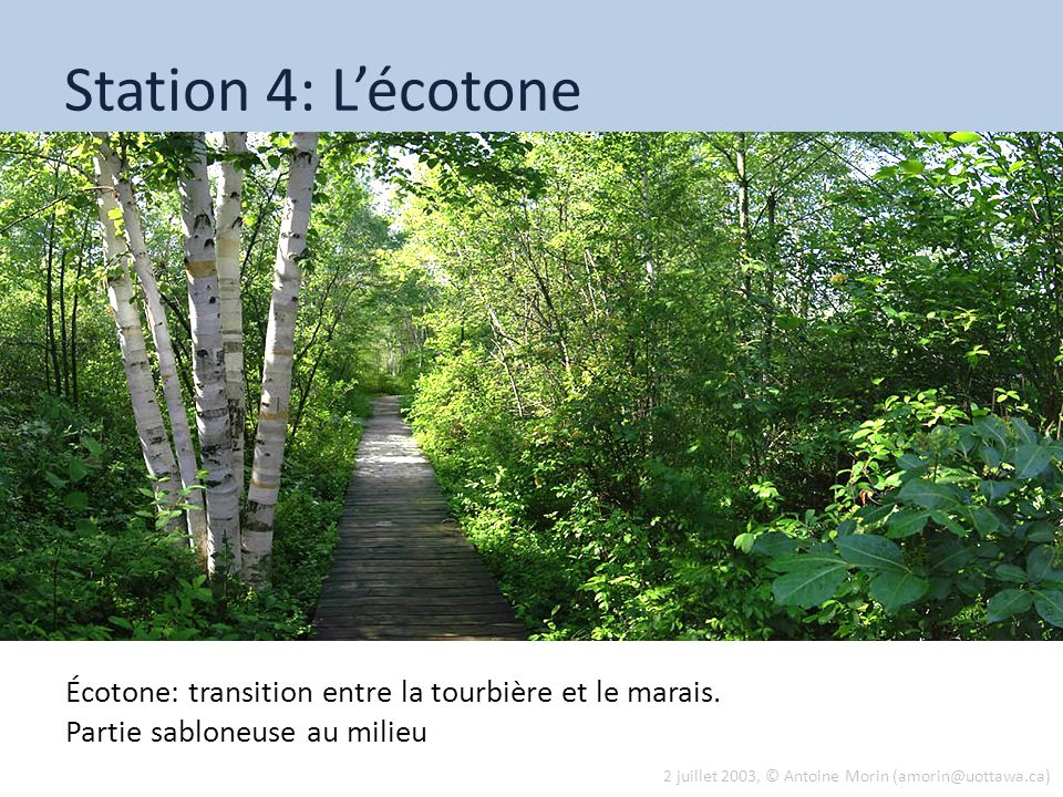 Tue 13 Aug 2013 Station 4: L'écotone.