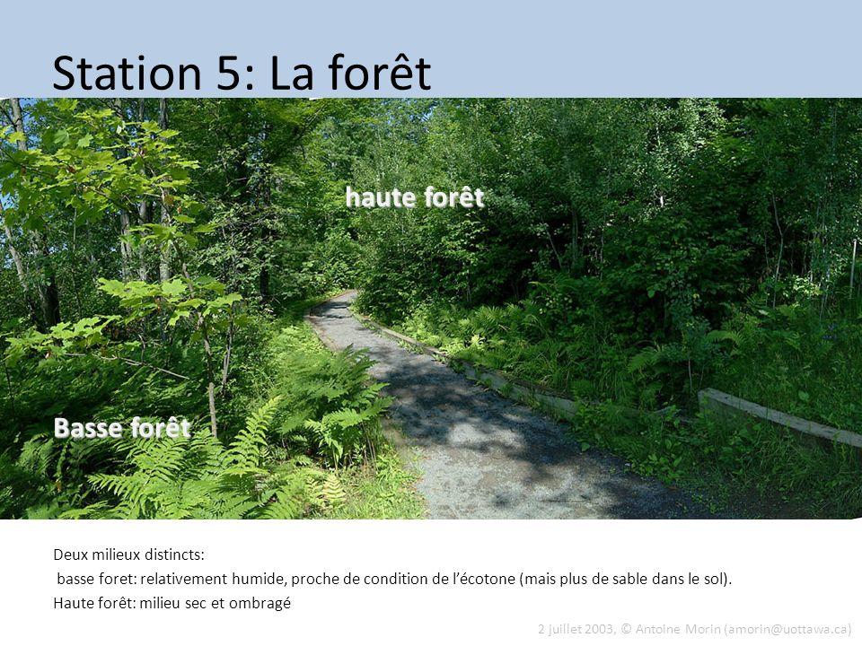 Station 5: La forêt haute forêt Basse forêt Deux milieux distincts:
