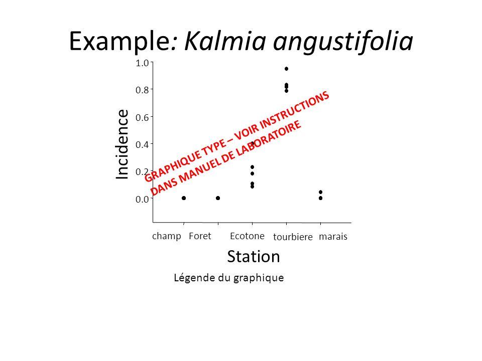 Example: Kalmia angustifolia