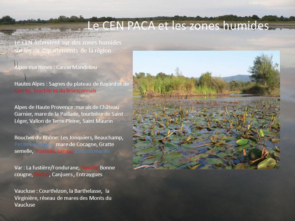 Le CEN PACA et les zones humides